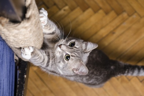 爪とぎで爪をとぐ猫を上から写した写真