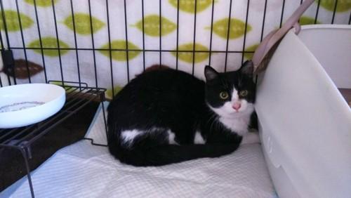白黒猫一匹