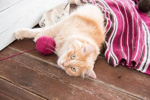 毛糸の横で寝転がる猫