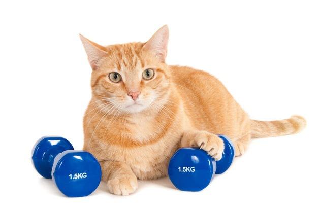 筋肉を鍛える猫
