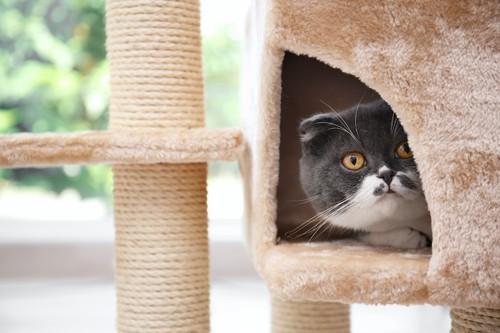 キャットタワーのハウスに隠れる猫