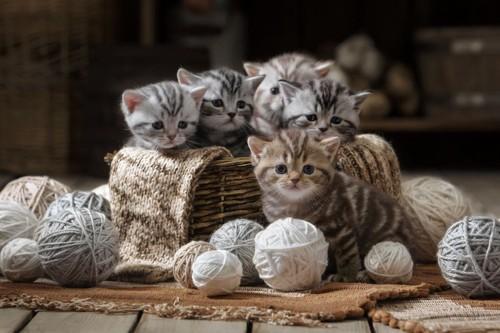 かごに入った子猫と毛糸