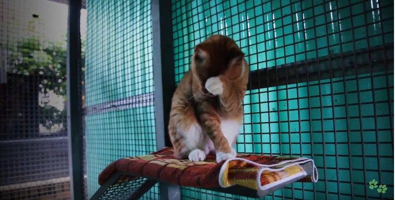ケージの中で毛繕いする猫