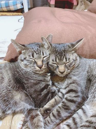 2ひきくっついている猫