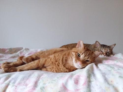 2匹でくつろぐ愛猫