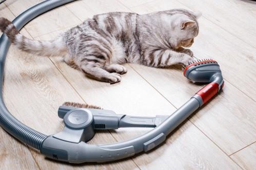 掃除機の横にいる猫