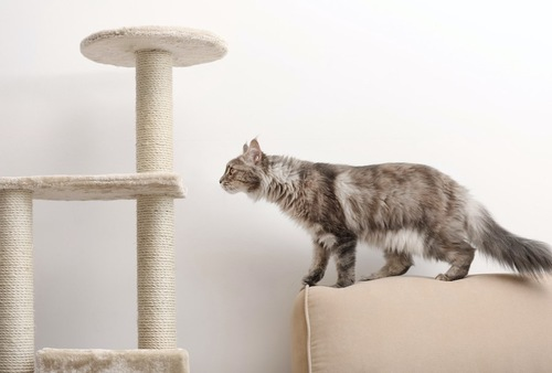 ソファーからキャットタワーに飛び移ろうとしている猫