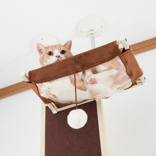 透明ハンモックでくつろぐ猫