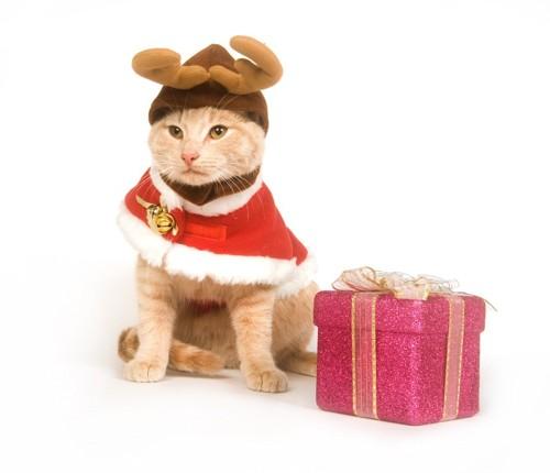 全身コスプレの猫