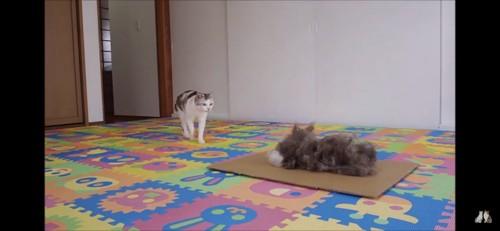 ネコ吉ちゃんと対面