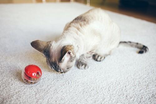 おもちゃから出るオヤツを食べている猫