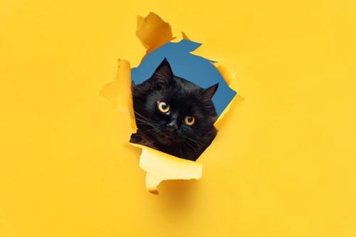 穴から覗く猫