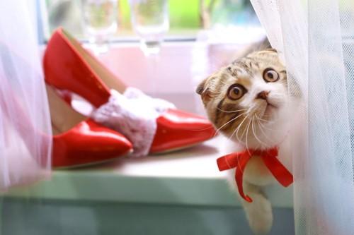 赤い靴と猫