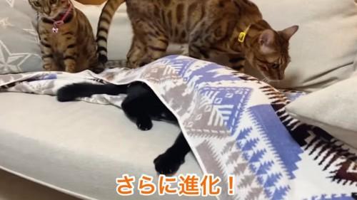 ソファのカバーの下に入る猫