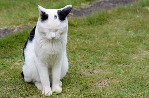 目をつぶる白黒猫
