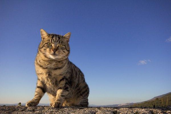 真っ青な空でお外にいる猫