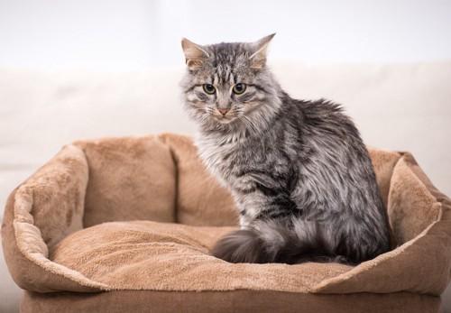 猫用のベッドに座っている猫