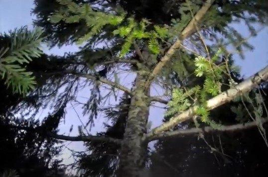 トムが木にのぼります