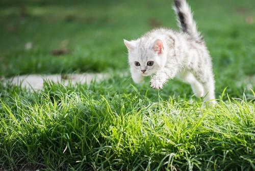 草むらでジャンプする子猫
