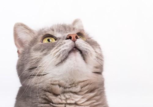 見上げる猫のヒゲ袋