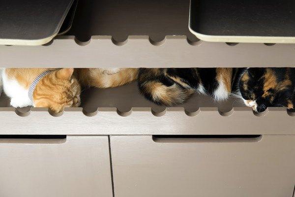棚の中で眠る猫
