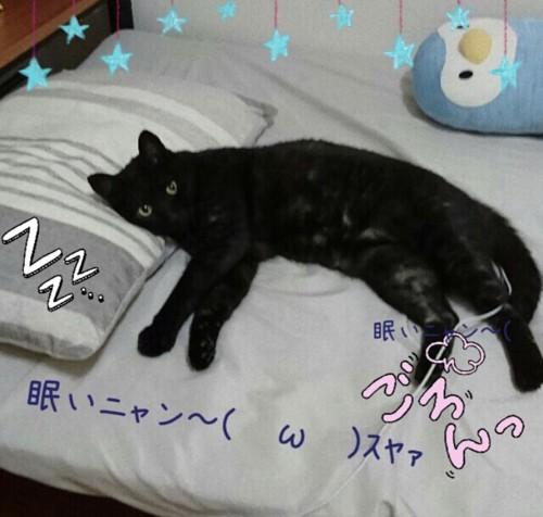 枕に頭をのせて横たわる黒猫