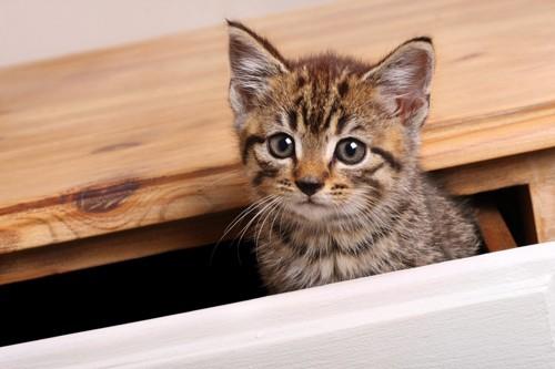 家具から覗く子猫