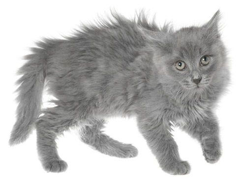 全身の毛が逆立っている子猫