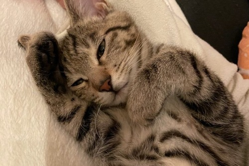 甘えている猫