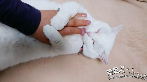 人の手をなめる猫