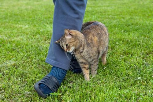 飼い主の足に顔をこすりつける猫