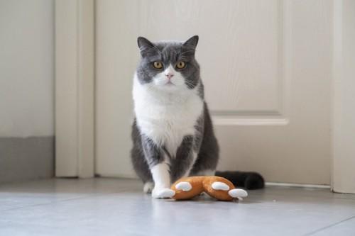 おもちゃの前に座る猫