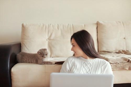 パソコンの前の女性とソファーの上の猫