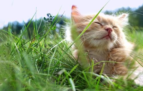 草原で気持ちが良さそうな子猫