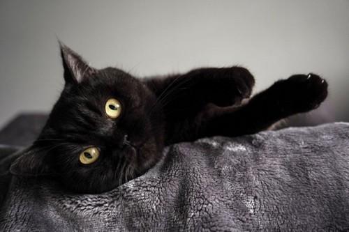 寝転ぶ黒猫