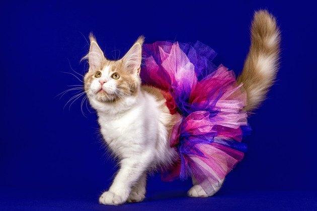 スカートを履いた猫
