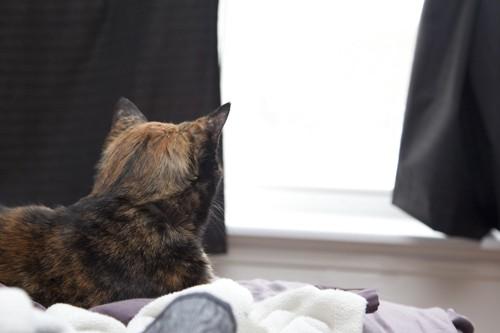 窓の方を見る猫の後ろ姿
