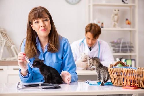試験管を持つ女性と猫