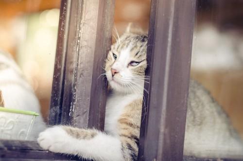 ペットフェンスから脱走しようとしている猫