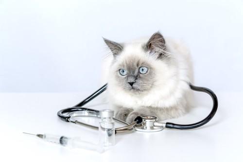 猫のお医者さん