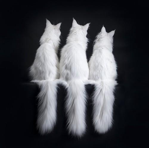 3本の尻尾