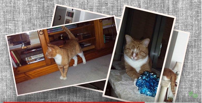 数枚の猫の写真