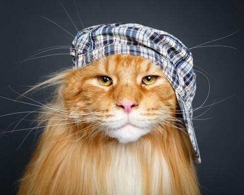 帽子を斜めにかぶった猫
