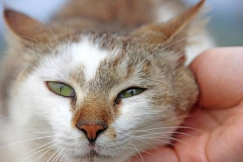 猫の首を撫でる人の手