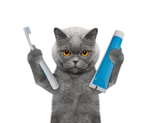 猫と歯ブラシと歯磨き粉