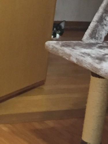 #覗いてる猫#