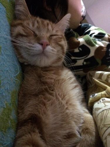 枕を使って眠る猫
