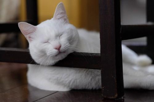 顎乗せして寝る猫