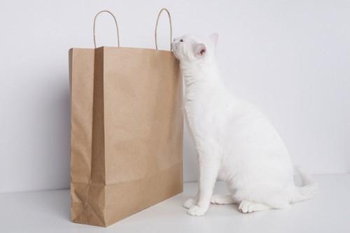 紙袋をのぞく猫