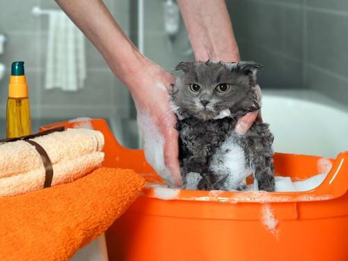 石鹸まみれの猫